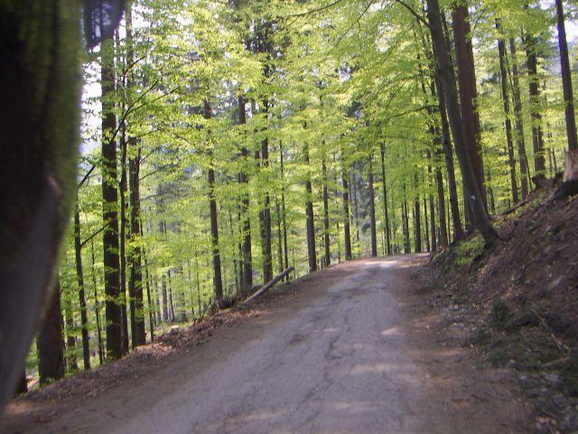 Zdjęcia: w drodze do istebnej, Istebna, wiosna, POLSKA