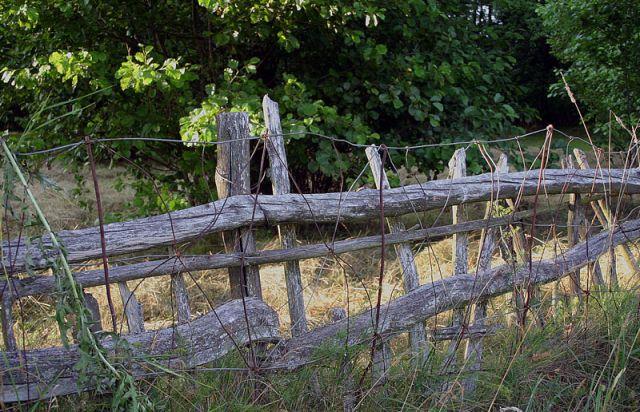Zdjęcia: Kózki nad Bugiem, Podlasie 10, POLSKA