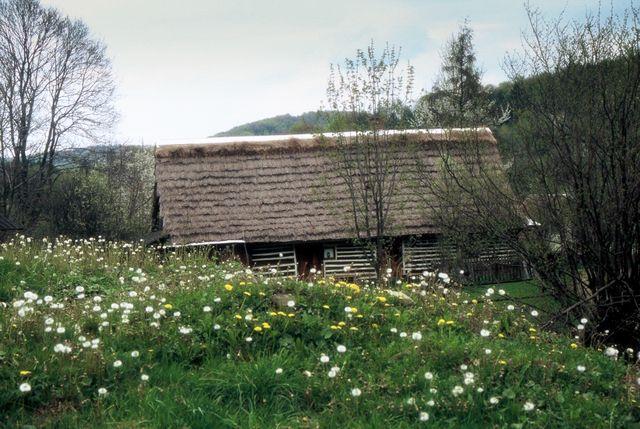 Zdjęcia: Olchowiec - Kolonia, Beskid Niski, Mglista przeszłość, POLSKA