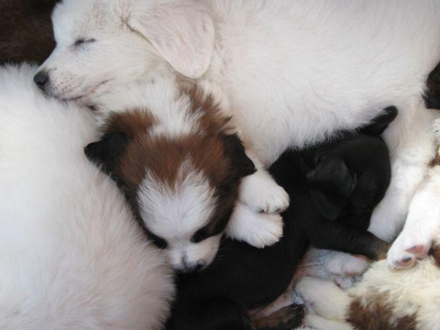 Zdj�cia: Zakopane, tatry, szczeniaki, POLSKA