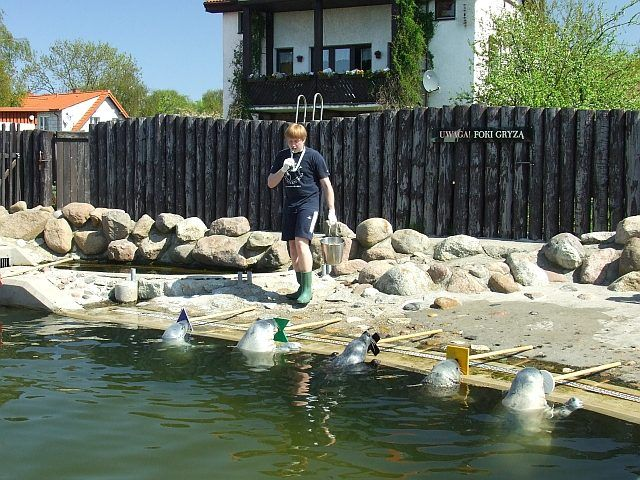 Zdj�cia: P�wysep Helski, Pomorskie, Odwiedziny w fokarium, POLSKA