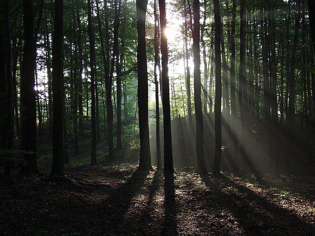 Zdjęcia: Trójmiejski Park Krajobrazowy, Pomorskie, Promienie, POLSKA