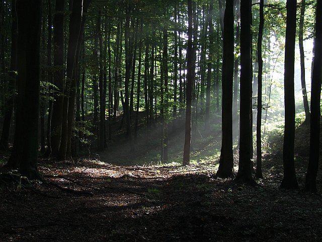 Zdjęcia: Trójmiejski Park Krajobrazowy, Pomorskie, Promienie 2, POLSKA