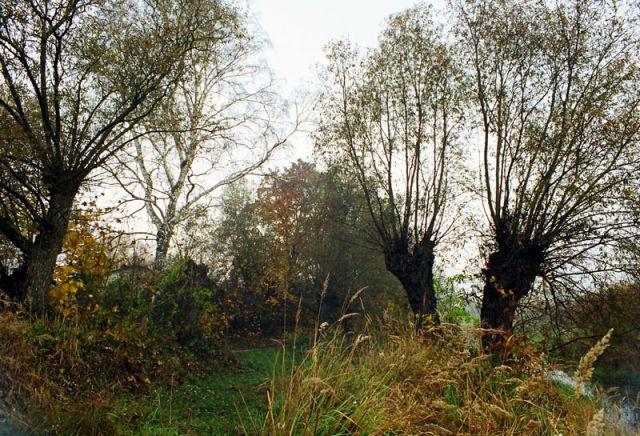 Zdjęcia: TROJAN nad BUGIEM, Podlase , POLSKA