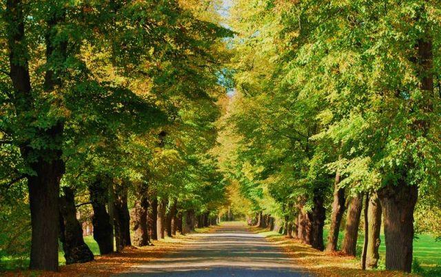 Zdjęcia: Rudy Raciborskie, Jesiennie, POLSKA