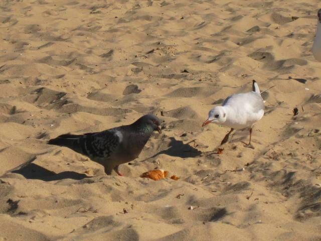 Zdjęcia: Brzeźno-plaża, Gdańsk, kto wygra?, POLSKA