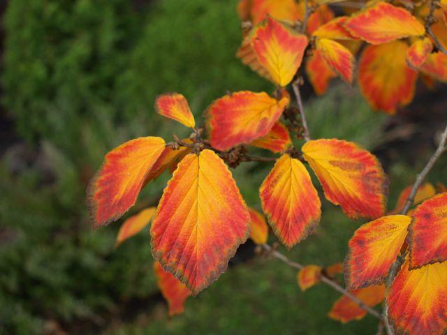 Zdjęcia: MPK, mazowsze, zwykłe liście, POLSKA