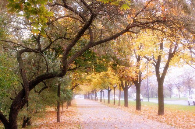 Zdjęcia: warszawa, mazowiecki, złota jesień-opad mgły, POLSKA