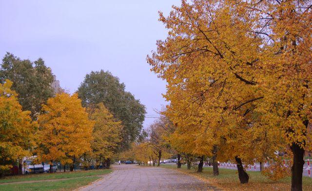 Zdjęcia: warszawa, mazowiecki, złota jesień, POLSKA