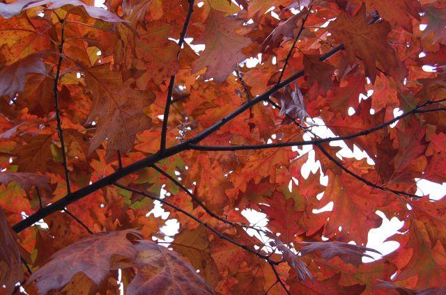 Zdjęcia: warszawa, mazowiecki, jesien, POLSKA