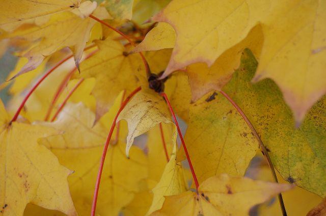 Zdjęcia: warszawa, mazowiecki, jesień, POLSKA