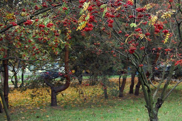Zdjęcia: warszawa, mazowiecki, owoce jesieni, POLSKA