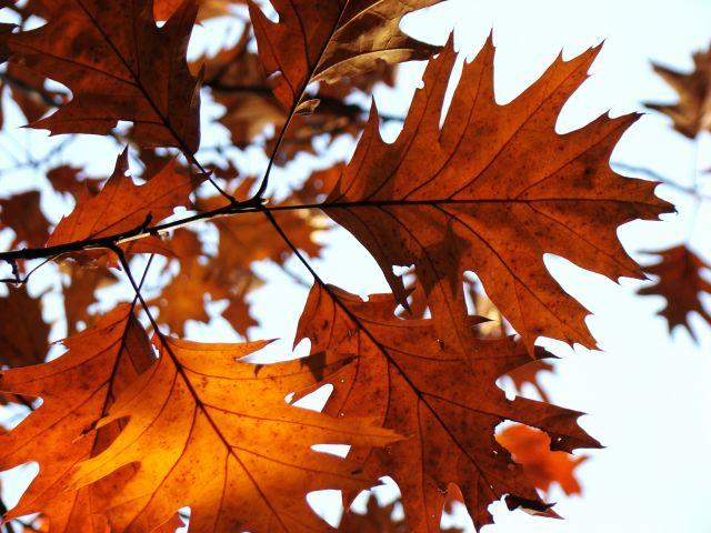 Zdjęcia: Śląsk, Śląsk, Barwy jesieni 1, POLSKA