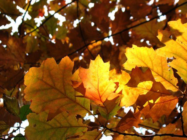 Zdjęcia: Śląsk, Śląsk, Barwy jesieni 2, POLSKA