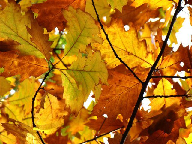 Zdjęcia: Śląsk, Śląsk, Barwy jesieni 3, POLSKA