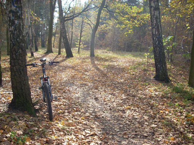 Zdjęcia: Mazowiecki Park Krajobrazowy, Mazowsze, Jesień., POLSKA