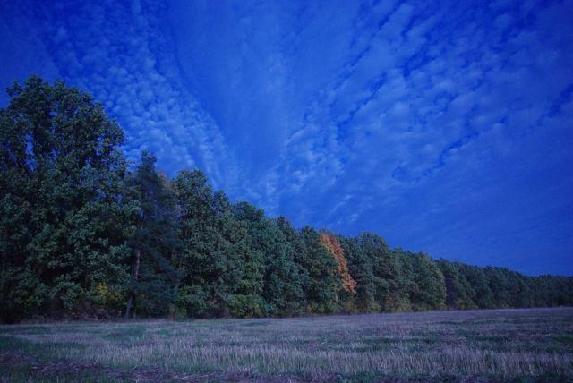 Zdjęcia: Radom, mazowieckie, Na skraju lasu, POLSKA