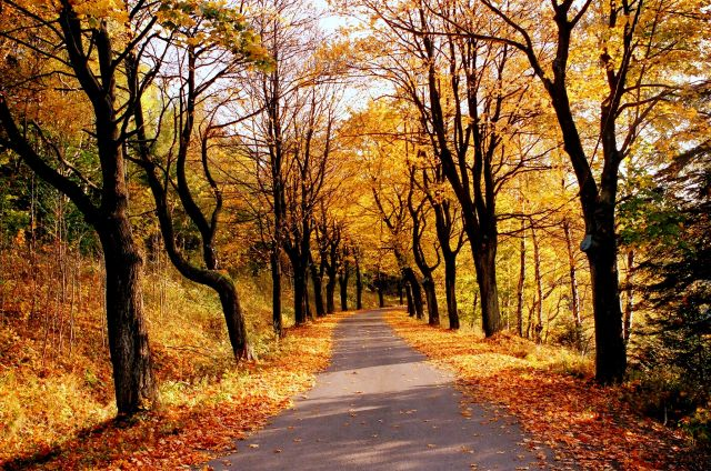 Zdjęcia: droga z przejścia granicznego w Lutyni, Pogranicze gór Złotych i Bialskich, droga do jesieni, POLSKA