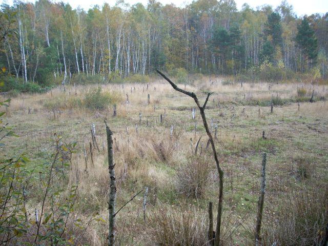 Zdjęcia: Mazowiecki Park Krajobrazowy, Mazowsze, Jesienna polana, POLSKA
