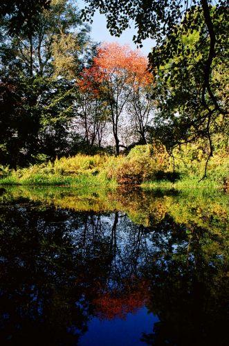 Zdjęcia: Park w Morysinie, naprzeciw pałacu w Wilanowie, Mazowsze, odbicie, POLSKA
