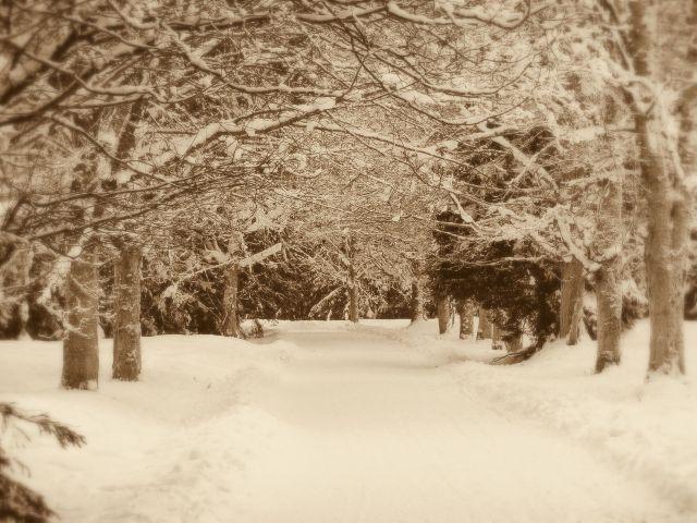 Zdjęcia: Dolina Kościeliska, Tatry, Zimowa aleja, POLSKA