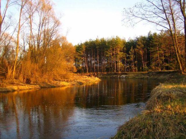 Zdjęcia: Okolice Drzewicy, Drzewiczka, POLSKA