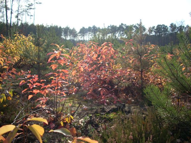 Zdjęcia: Mazowiecki Park Krajobrazowy, Mazowsze, Kolory jesieni, POLSKA