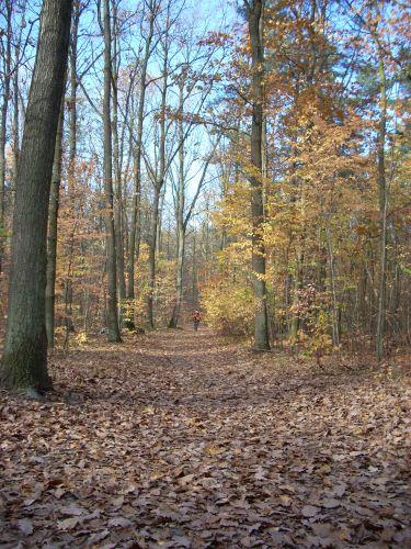 Zdjęcia: Mazowiecki Park Krajobrazowy, Mazowsze, Las jesienią, POLSKA