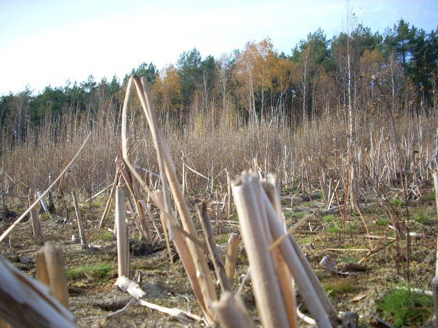 Zdjęcia: Mazowiecki Park Krajobrazowy, Mazowsze, Trzcinowisko, POLSKA