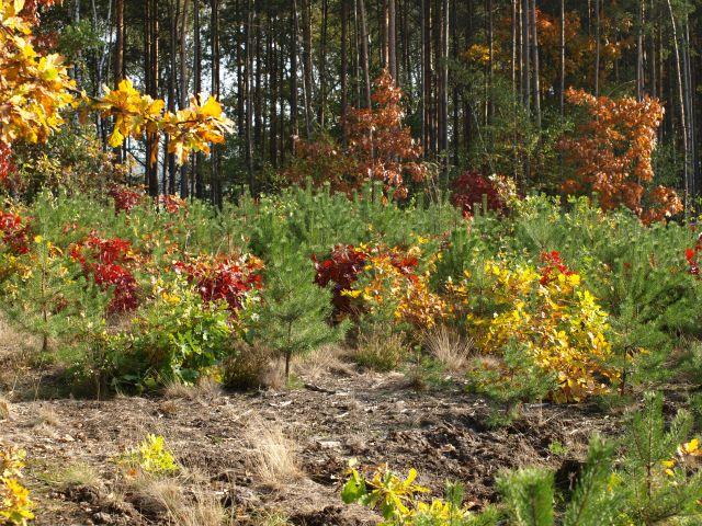 Zdjęcia: MPK, Mazowsze, kolorki jesieni , POLSKA