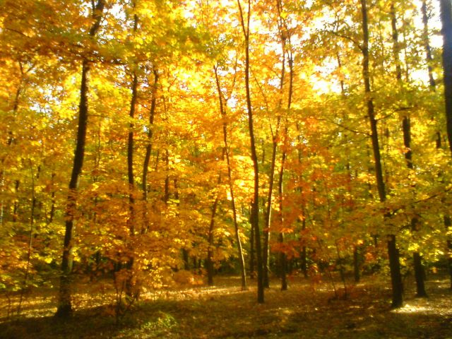 Zdjęcia: Dąbrówka, Jesień, POLSKA