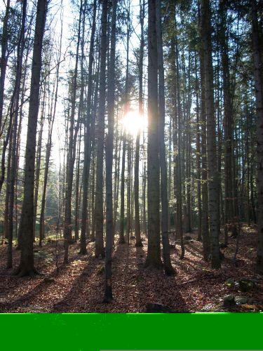 Zdjęcia: Zawoja, Beskid Żywiecki, W lesie., POLSKA