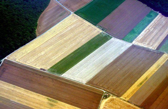 Zdjęcia: Z lotu ptaka Okolce Siedlec, :Podlaski dywan:, POLSKA