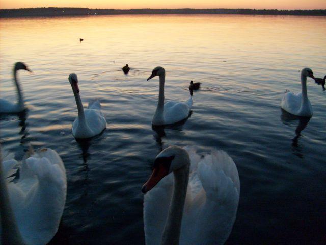 Zdjęcia: boszkowo , wielkopolskie, zachód słońca, POLSKA