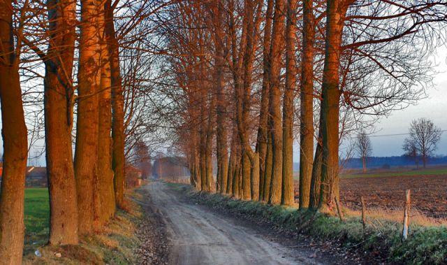 Zdjęcia: Droga do Chodowa k.Siedlec, Jesien na Podlasiu 4, POLSKA
