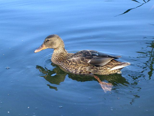 Zdjęcia: Jezioro Wiartel, Mazury, ..., POLSKA