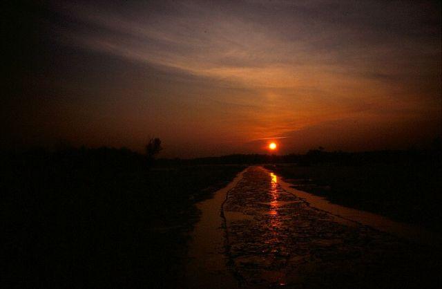 Zdjęcia: puszcza kampinoska, mazowsze, wschód słońca, POLSKA