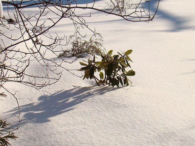 Zdj�cia: las, kieleczyzna, zima 2, POLSKA