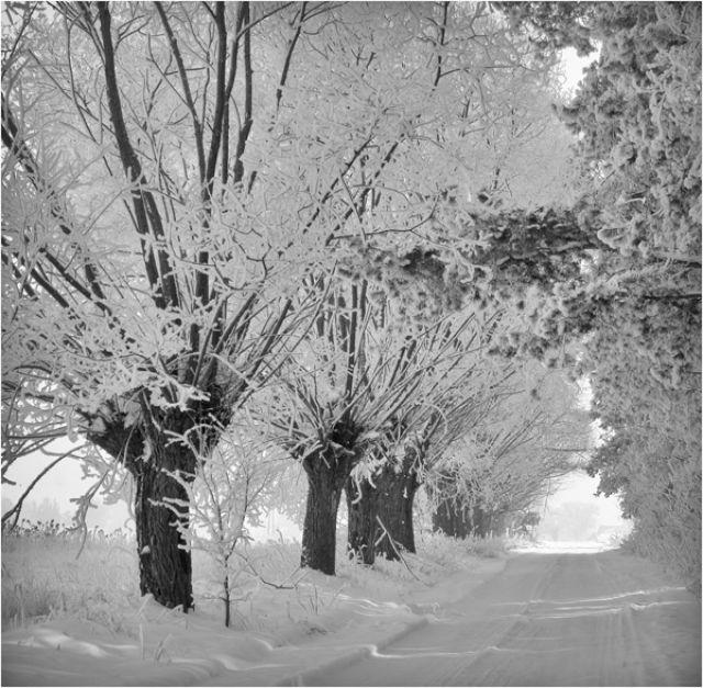 Zdjęcia: Chodów k\Siedlec, -Podlasie , Podlaskie klimaty, POLSKA
