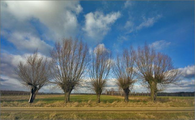 Zdjęcia: okolice Kotunia, podlasie, Podlaskie klimaty 5, POLSKA