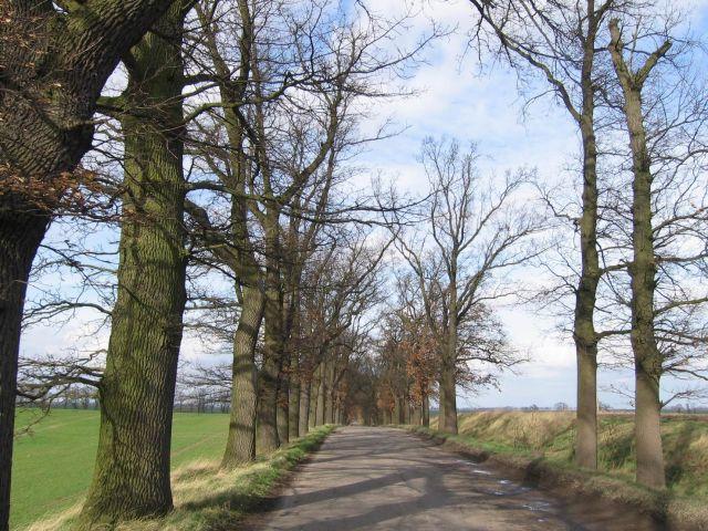 Zdjęcia: 2 kilometry w stronę Zaborska, zachodniopomorskie, z serii polskie drogi - Gościniec - Pomnik przyrody , POLSKA