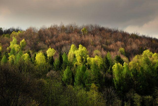 Zdjęcia: Bereżki, Bieszczady, Chmurna wiosny twarz, POLSKA
