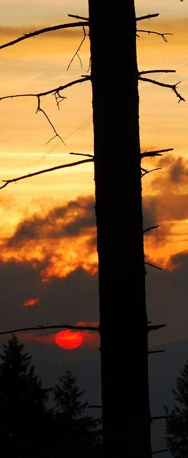 Zdjęcia: Stożek Wlk., Beskid Śląski, Owocujący świerk ;-), POLSKA