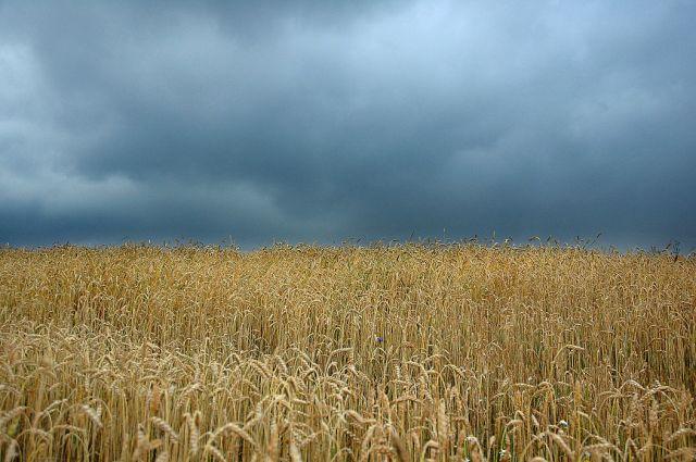 Zdjęcia: Górna Wola, małopolska, przed deszczem, POLSKA