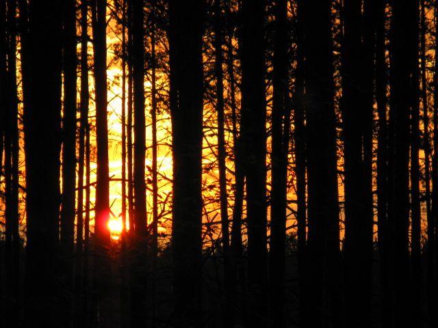Zdjęcia: Mazowiecki Park Krajobrazowy, Mazowsze, ..., POLSKA