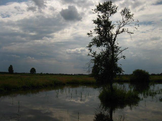 Zdjęcia: Mazowiecki Park Krajobrazowy, Mazowsze, Bagno Całowanie, POLSKA