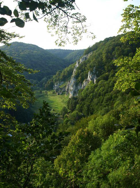 Zdjęcia: Zielony szlak ponad Jaskinią Ciemną, Ojców, pomiędzy listkami, POLSKA
