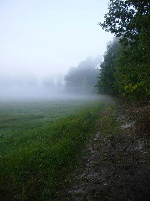 Zdjęcia: Leszno, Wielkopolska, Poranek, POLSKA