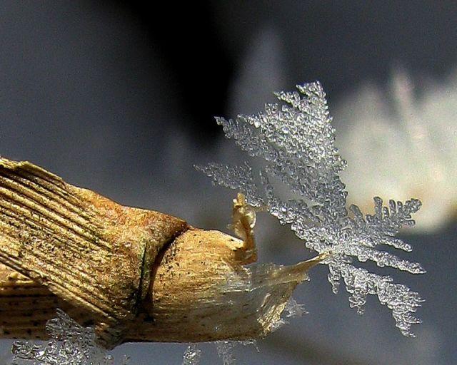 Zdjęcia: łąka, Śląskie, Lodowe listki..., POLSKA