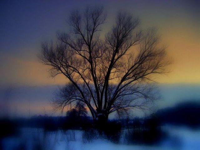 Zdjęcia: prowincja, łodzkie, Stare drzewo i morze... śniegu;), POLSKA